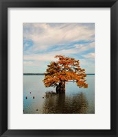 Cypress In Autumn 2 Framed Print