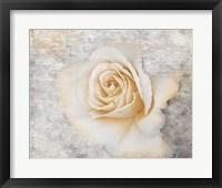 Vintage Rose 2 Framed Print