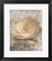 Vintage Rose 3 Framed Print