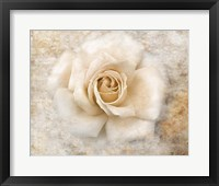 Vintage Rose 5 Framed Print
