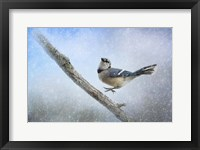 Bluejay In The Snow Framed Print