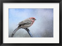 Finch In The Snow Framed Print