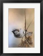 Framed Hanging On Sparrow