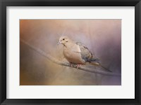 Framed Mourning Dove On A Winter Evening