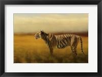 Framed Tiger In The Golden Field