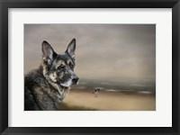Framed German Shepherd Dreaming Of The Beach