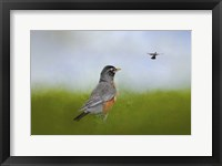 Framed Robin In The Field