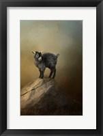 Framed Little Rock Climber