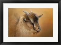 Framed Portrait Of A Nubian Dwarf Goat