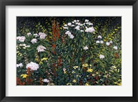 Framed Wildflower Garden