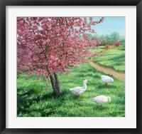 Framed Cherry Blossom Time