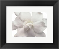 Framed Gardenia In Bloom