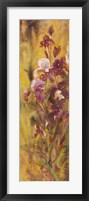 Bearded Iris IV Framed Print