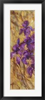 Framed Bearded Iris VII
