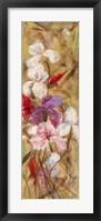 Bearded Iris VIII Framed Print