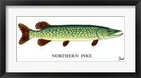 Framed Northern Pike