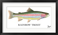 Rainbow Trout Framed Print