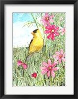 Framed Yellow Finch Cosmos