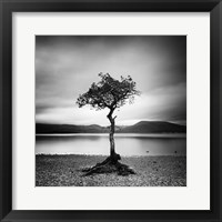 Framed Millarrochy Tree