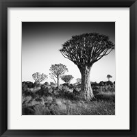 Framed Namibia Quiver Trees