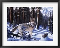 Big Timber Framed Print