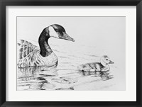 Framed Canada Goose And Baby