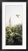 Framed Hummingbird 2
