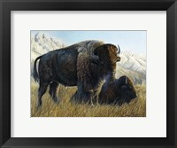 Framed Resting Buffalo