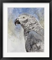 Framed Bird - Head Study