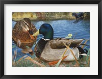 Framed Mallards