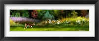 Framed Doe In Spring Glade