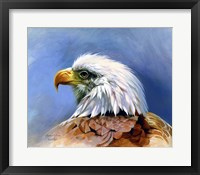 Framed Eagle Portrait