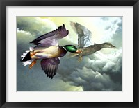 Framed Mallards In Flight