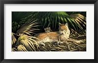Framed Sunny Spot Bobcat with Kittens