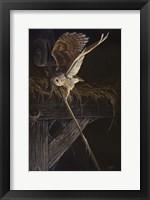 Framed Tight Rope Barn Owl
