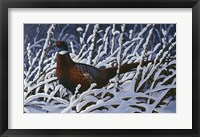 Framed Fresh Snow - Ringneck Pheasant