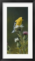 Framed Goldfinch On Thistle