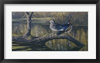 Framed Spring Pair - Wood Ducks