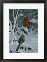 Framed Cardinals & Brambles