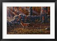 Framed Autumn Reds - Red Fox