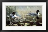 Framed Nesting Loons