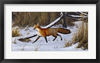 Framed Fox Trot  - Red Fox
