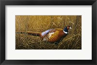Framed Sneaking Through The Long Grass - Ring Neck Pheasant