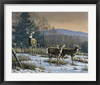 Framed Prime Time - Whitetail Deer