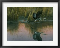 Framed Evening Flight - Great Blue Heron