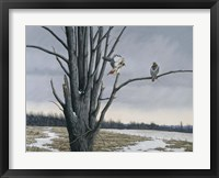 Framed Old Elm & Redtails