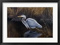 Framed Making Strides - Great Blue Heron