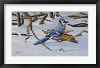 Framed Bluejay