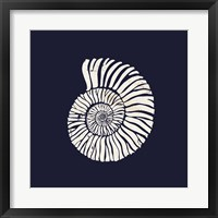 Framed Contemporary Coastal Shell II