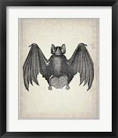 Framed Bats 2
